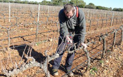 La poda. La viña y el vino del año 2021 (3)